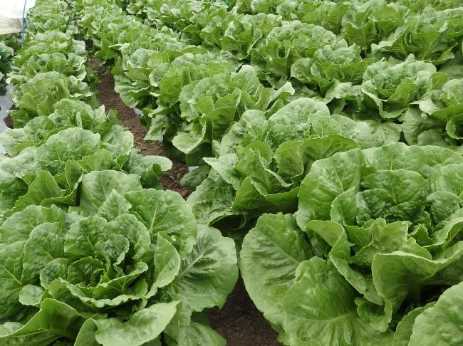 野菜摂取量向上に。ワタミ有機野菜100%メニュー、高くない?