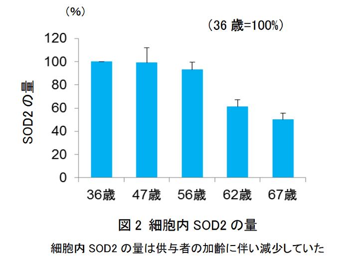 ミトコンドリアは加齢とともに質低下、KOSE研究結果