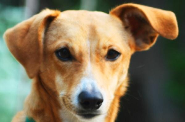 がん探知犬検査開始 人の尿からほぼ100% 「がん発見」