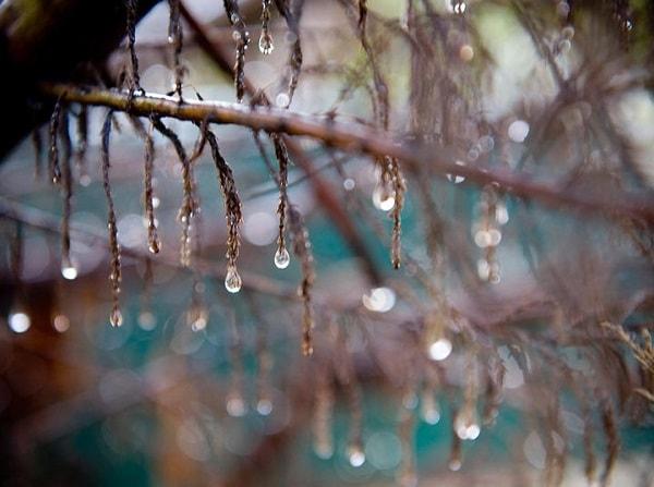 関東などで梅雨入り ニオイ悩み本格化のシーズンへ